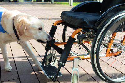 Assistenzhund zieht einen Rollstuhl